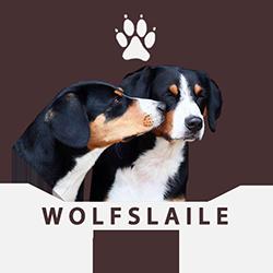 Wolfslaile | Entlebucher Sennenhunde