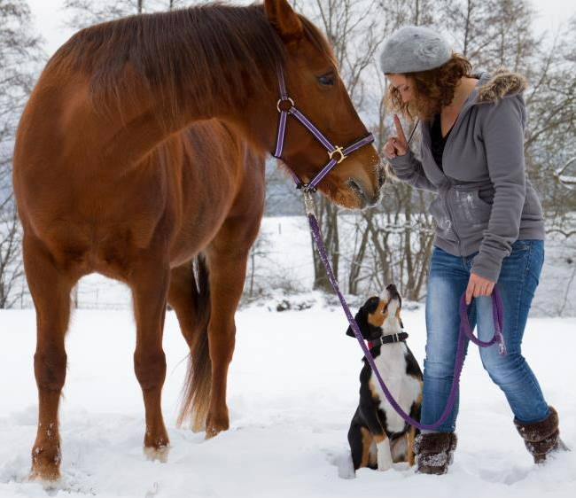 Annika mit Chakira und Arosa im Schnee