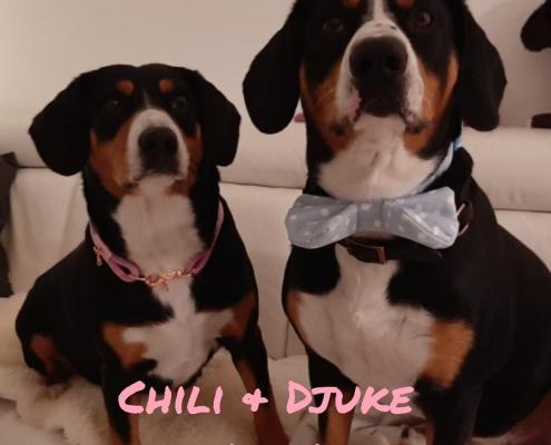 Chili und Djuke
